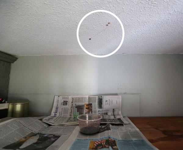 嘉米拉拿报纸铺在衣橱上方,还用一个塑料碗盛装从天花板滴下来的尸水。