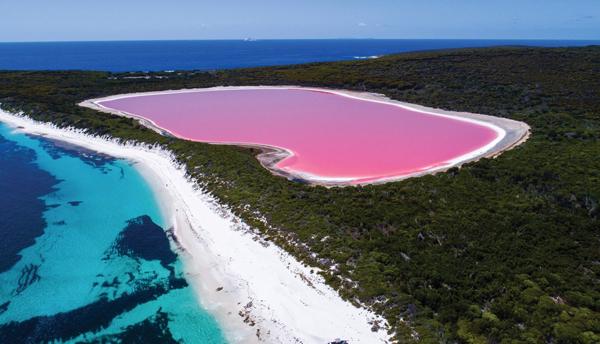 璀璨而闪耀的粉红湖,美得让人惊叹!