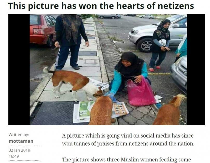 從照片上看,穆斯林女子拿著食物,喂食街上的流浪狗。(網絡截圖)