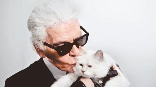 暹罗猫Choupette极得老佛爷欢心,曾拍摄不少广告及杂志封面。(互联网)