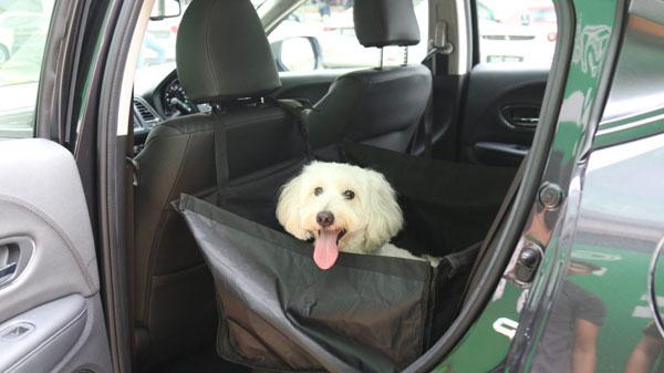 新加坡的动物,自本周三起,可以随同主人乘搭Grab。