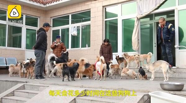 二牛、杨先生与狗狗一起生活,花上自己所有时间和金钱。
