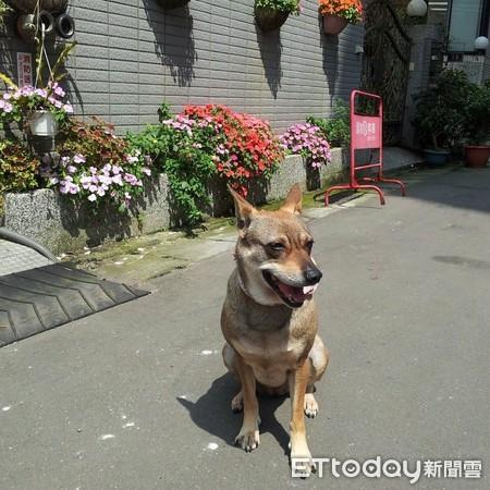 原本家人不同意养狗,但辛蒂后来成为全家的宝贝。