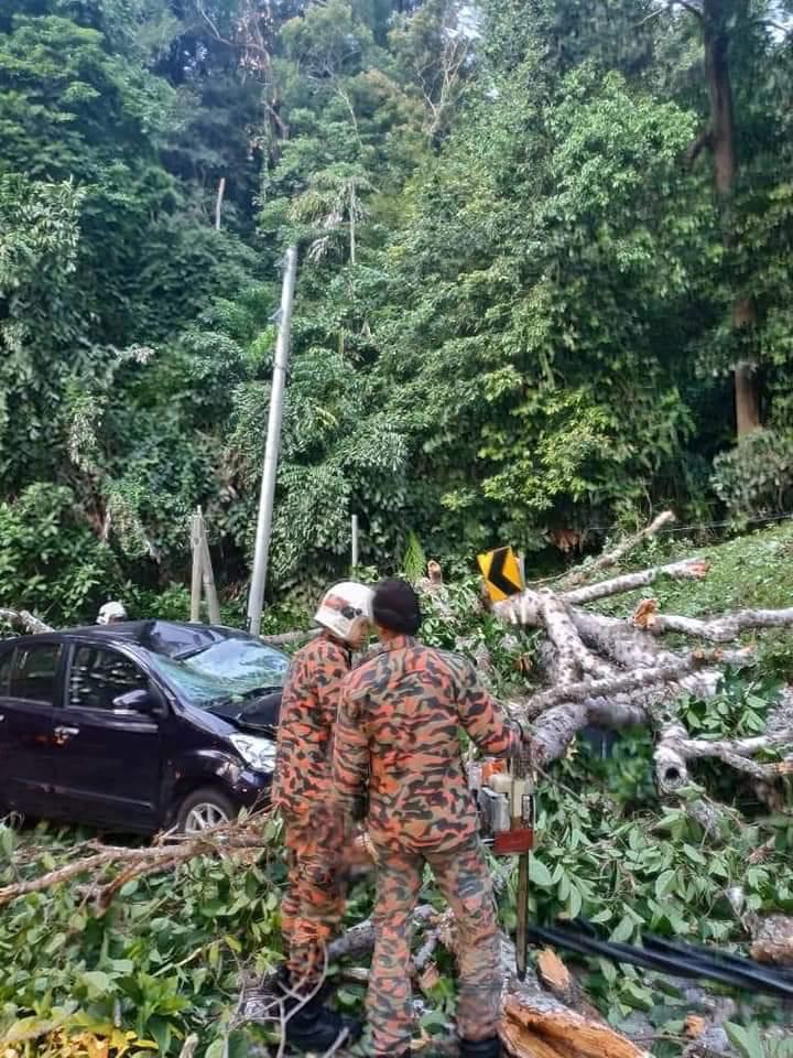 事发后,消拯员到场锯开树干,清理现场。