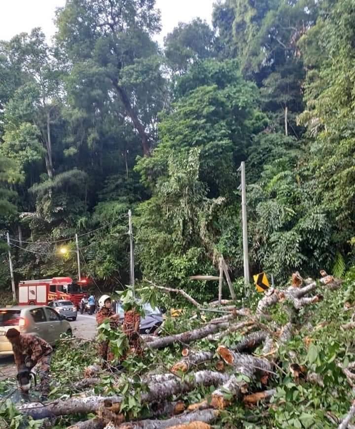 消拯员用电锯锯开树干,进行善后工作。