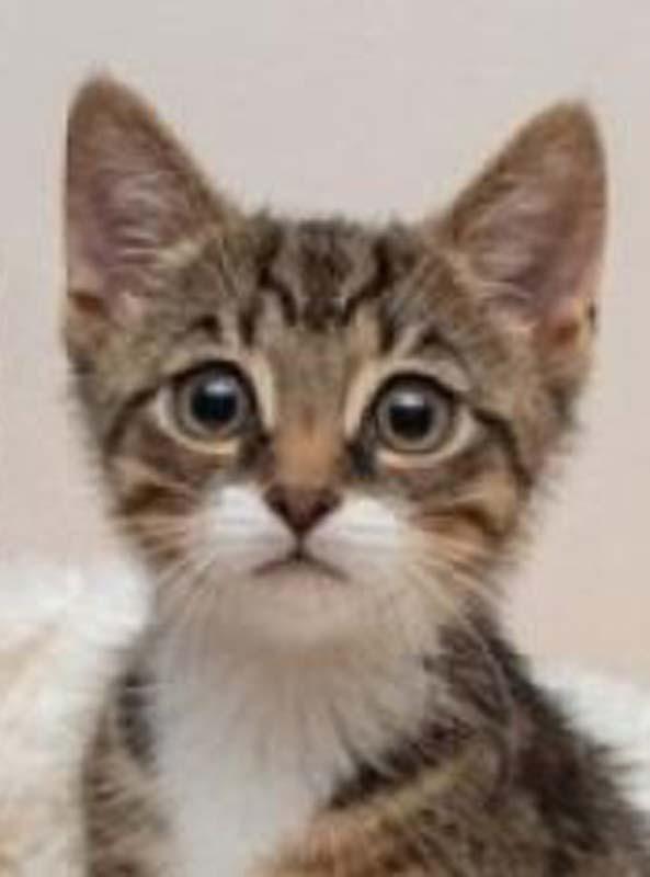 赖小姐表示,小猫误闯跑道造成班机延误降落。