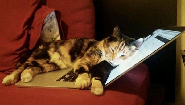 """猫咪""""麻糬""""踩到电脑按键发送出去,没想到最后竟顺利通过,让它的主人施莱德获得10万美元的补助。"""