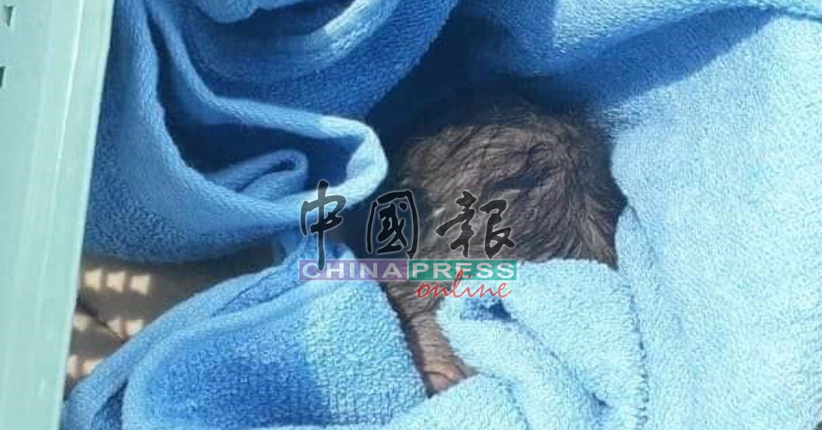 置在菜篮的女婴被发现时,用蓝色毛巾包裹。