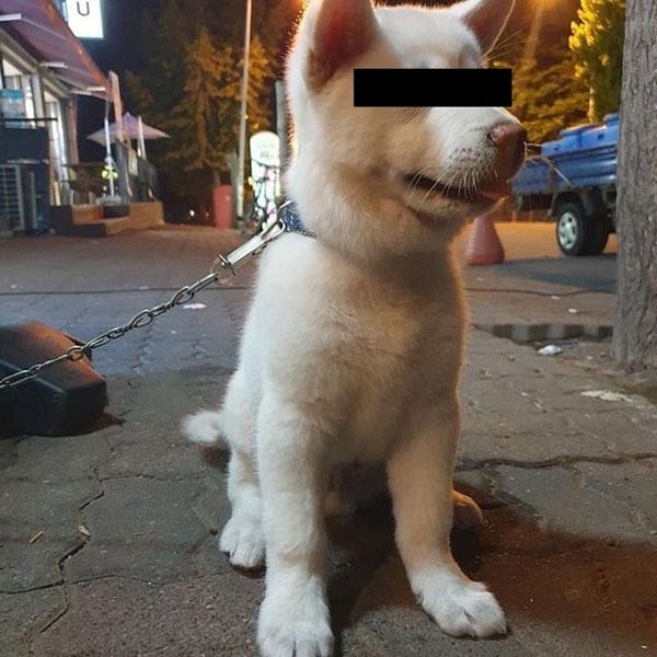 受害幼犬。