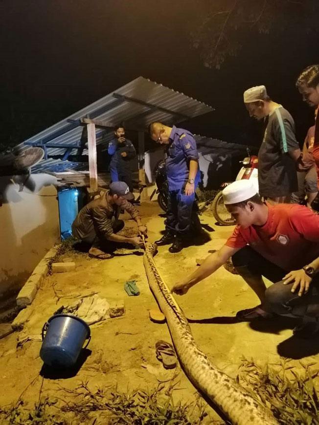 攻击单亲妈妈的大蟒蛇遭村民砍死。