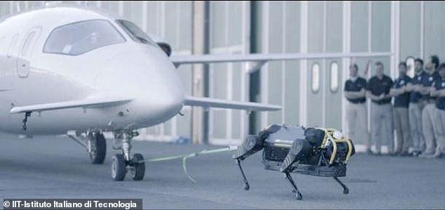 意大利理工学院近日对研发的机器狗HyQReal进行测试,成功拉动一架3吨重飞机。(互联网)