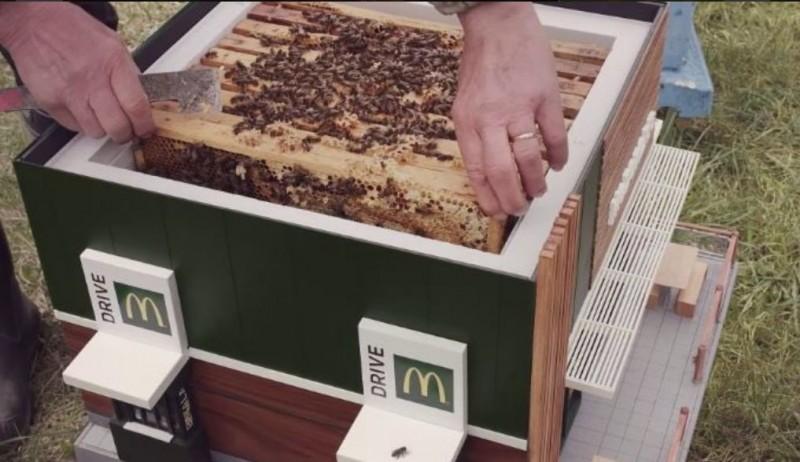 为野生蜜蜂所打造的麦当劳造型蜂箱,里面有一层一层的巢片。
