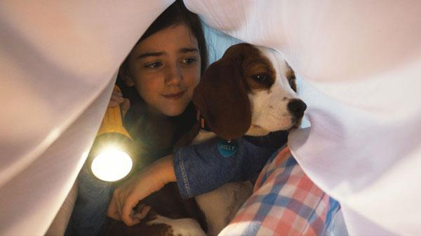 电影善用狗的忠诚、体贴以及特殊能力,增进贝利与CJ的情感。