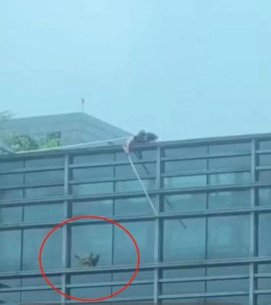 城管人员用棍子挥向母鸡。