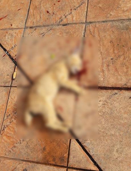 猫尸附近皆有血渍,包括地上、墙壁,因此怀疑猫咪是遭人害死。