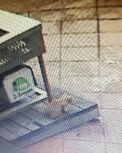 """闭路电视显示猫咪在""""出事""""前,走过饮食店外的摊子。"""