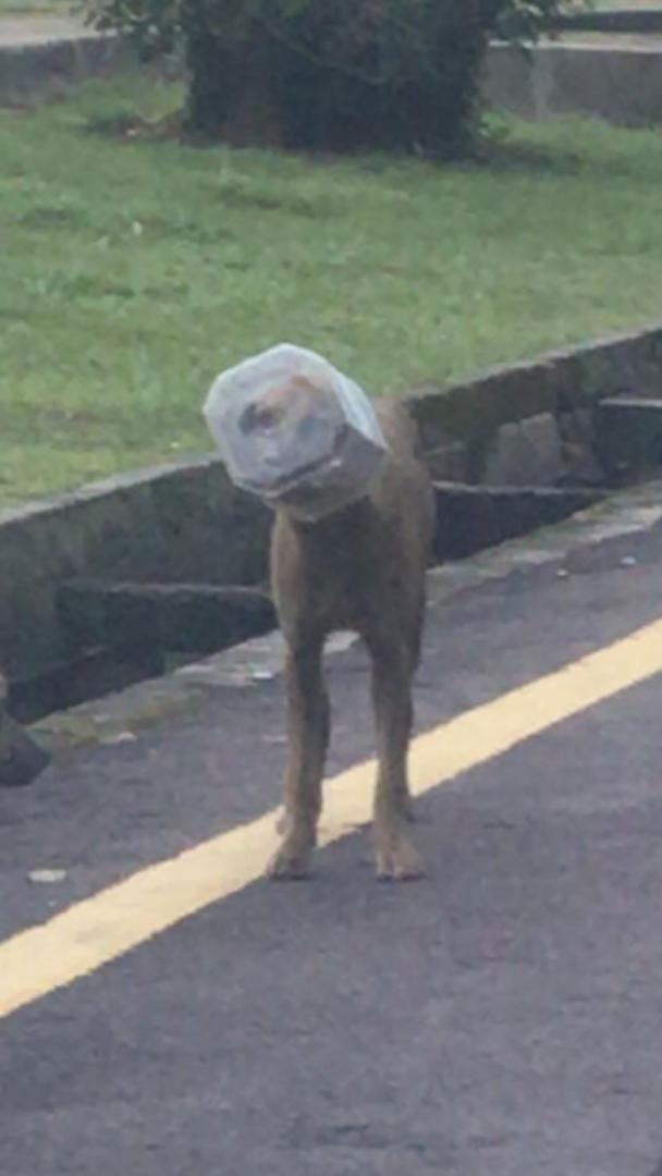 狗儿头部被塑料罐套住,无法自行挣脱。