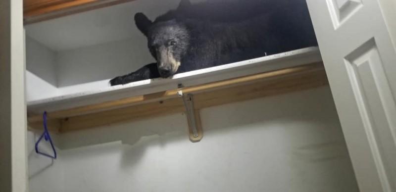 """美国蒙大拿州米苏拉郡有""""窃贼""""擅闯民宅,警方到场看到嫌犯是一只黑熊后当场傻眼。"""
