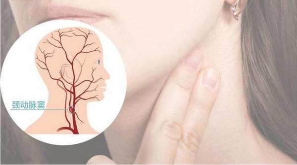 颈动脉窦像黄豆般大小。