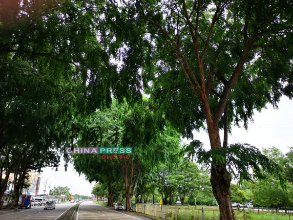 大路旁的树木,应当定期修剪及检查,确保树木的状态良好,以保障道路使用者的安全。