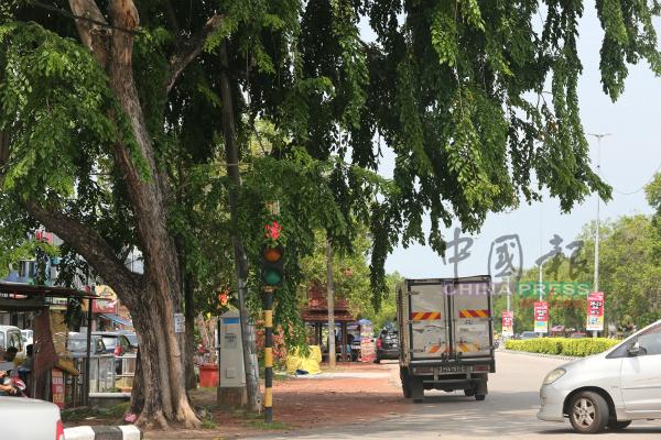 树木太茂盛,遮挡红绿灯,随时引起公路使用者混淆,并引发意外。