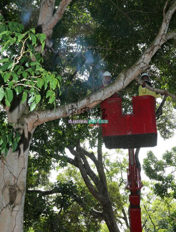 汉都亚村与周围环境的管理层为甲博物院机构,过去没有关注环境卫生问题,以致当地环境恶劣,如今获得市政厅派员清理。