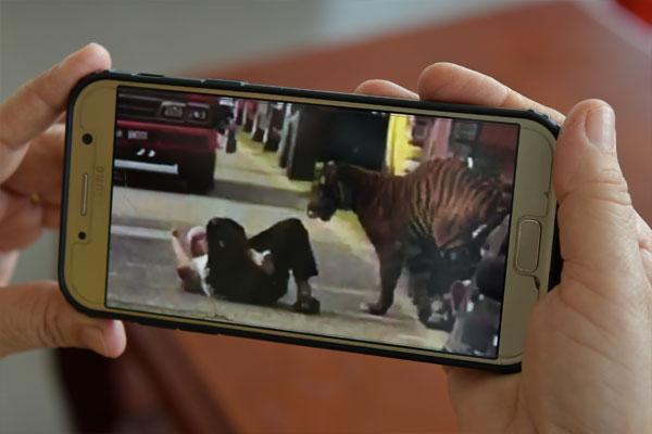 阿都法达在事发时慌张倒地,老虎缓缓走向他,让他十分害怕会死在虎口下。