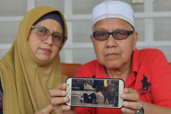 阿都法达(右起)与妻子出示他倒地时,被民众拍下老虎亲近他舔了两下的视频。