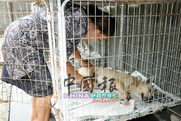 莲塔小心照料刚接受结扎,身体虚弱的狗只。