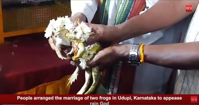 印度人帮青蛙结婚求雨。