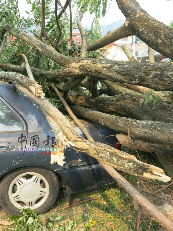车辆的后部遭树干压中,所幸后车镜没破。