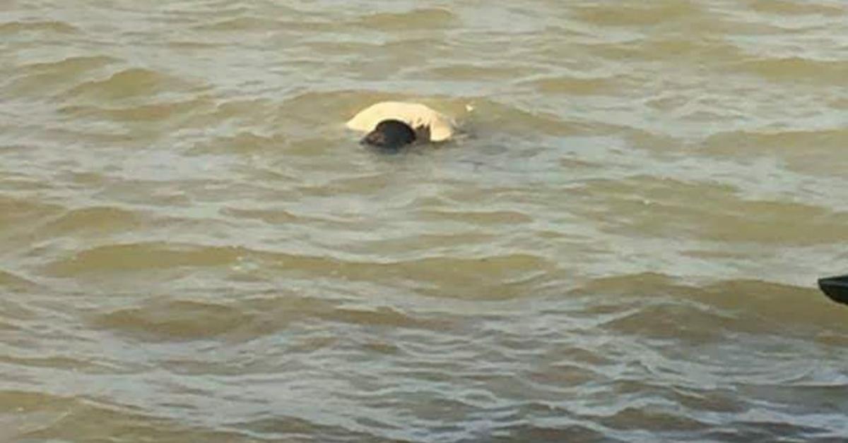 杜永岛水域发现一具衣着整齐的浮尸。