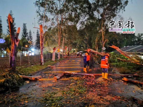 援助队伍到场协助展开清理及锯树工作。