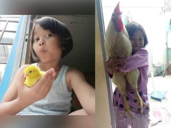 印尼女童姬坦奥莉亚雷丝塔丽,细心照顾一只小鸡变成大公鸡,同时也让她减少依赖手机。