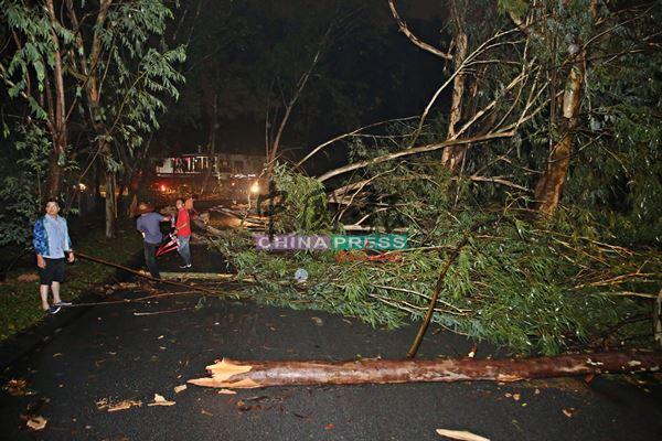繁华花园来往翡翠岭路段因沿路多棵树倒,导致交通一度中断,芙蓉市议员们亲自到灾区为居民善后。
