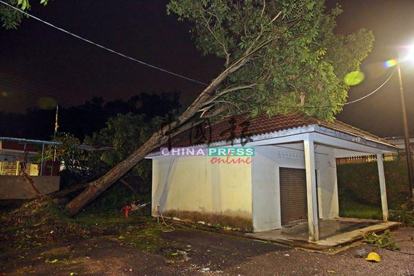 一棵大树不偏不倚地倒下,压中一间空置的建筑物。