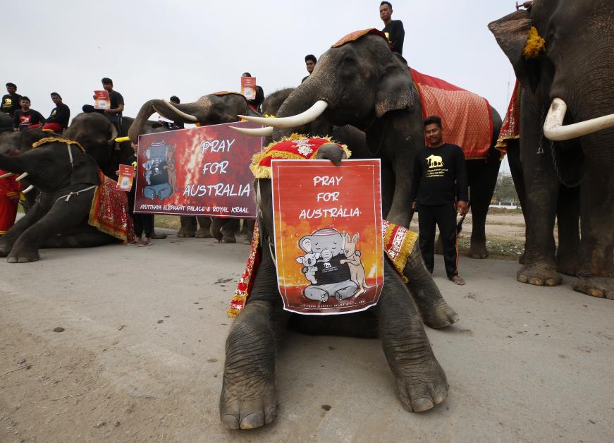 一只小象用象鼻持着标语牌面向镜头。(欧新社)