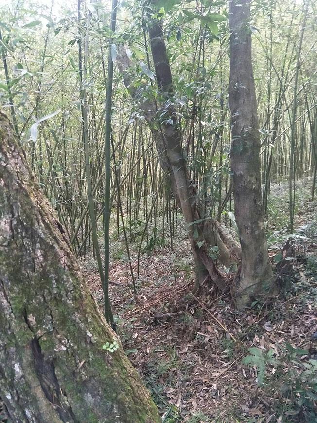林男疑似勒毙家人后在山林间上吊。