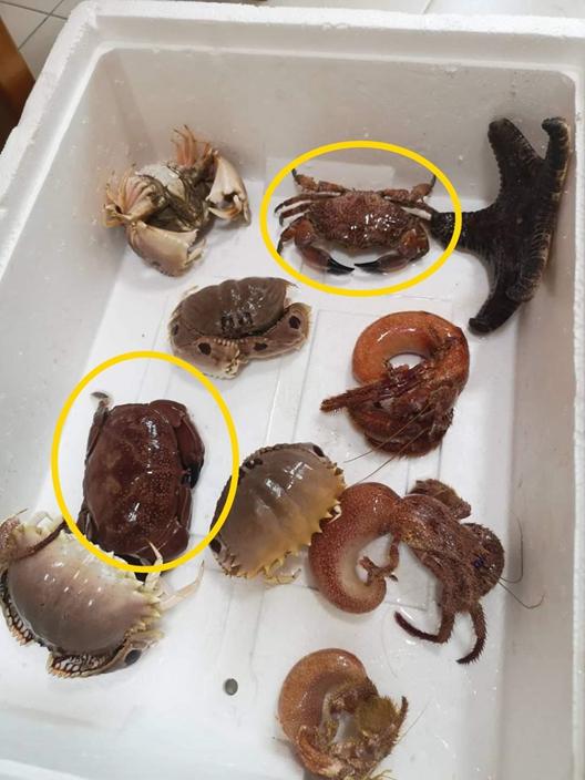网民在鱼市场购买了一批螃蟹。