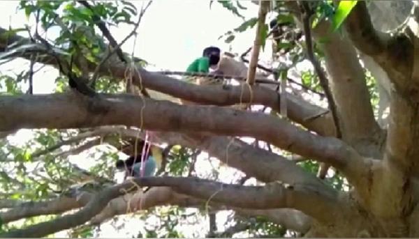 印度有村民被要求在树上进行14天隔离。