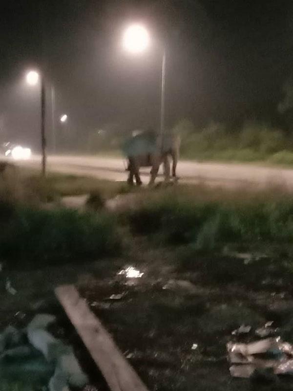 体积庞大的野象出现在哥打丁宜马威六哩路吓坏民众。(取自面子书)