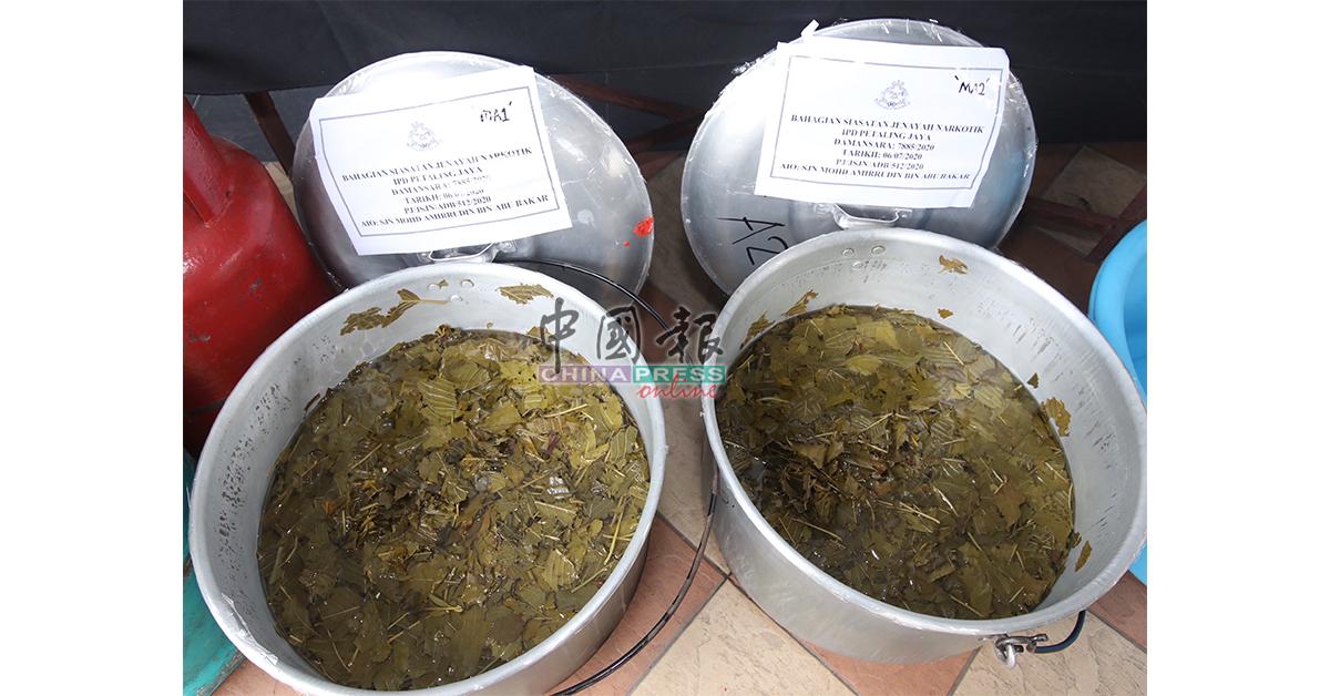 警方展开逮捕行动时,两名嫌犯正熬煮葛冬水。