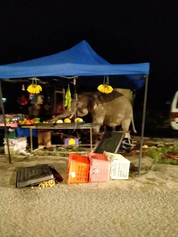 野象捣毁路旁水果摊,导致摊主损失1000令吉。