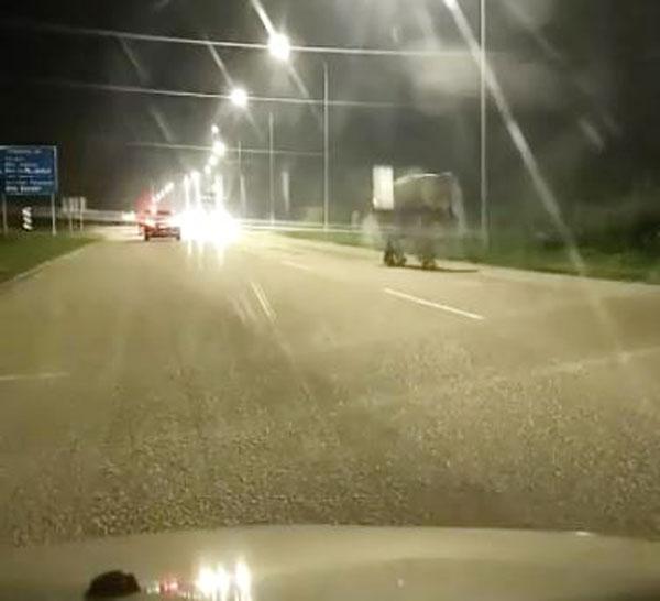 野象在公路上横冲直撞,丝毫不惧怕路上的轿车。