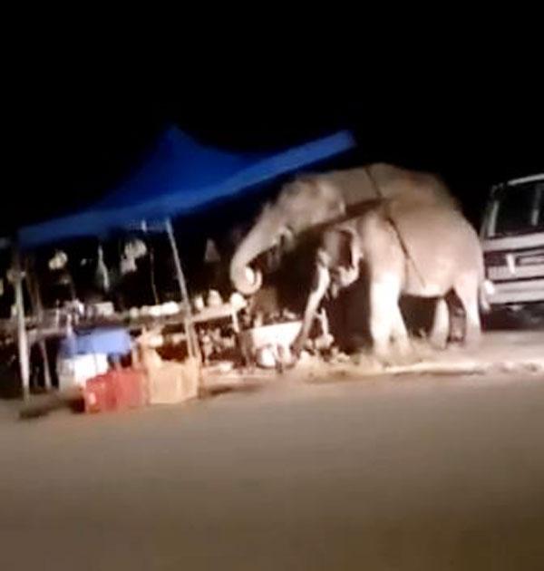 破坏水果摊的两头野象,相信为母子关系。