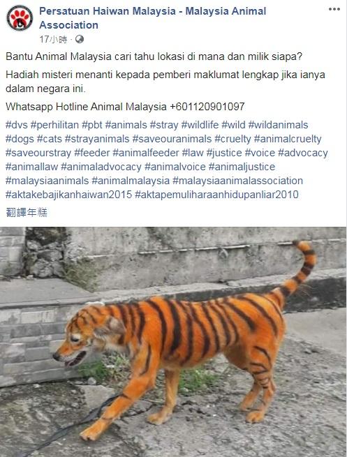 马来西亚动物协会呼吁知情人士,提供有关狗只遭人染成老虎模样的情报。(取自马来西亚动物协会面子书)