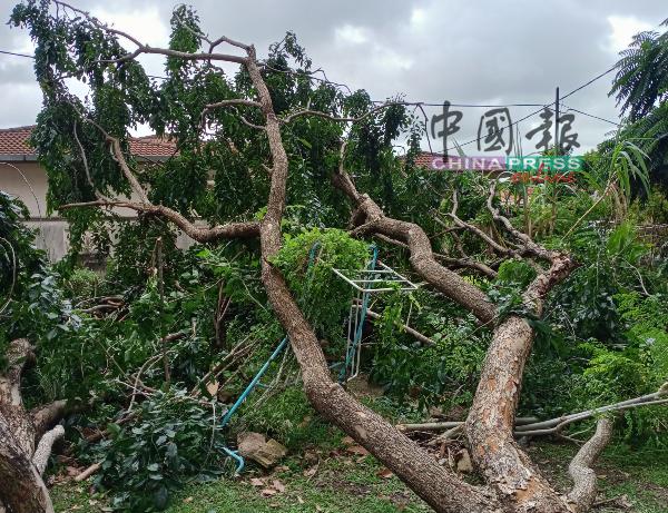 巨大树干往休闲场所倒去,沉重的枝干压毁晒衣架。