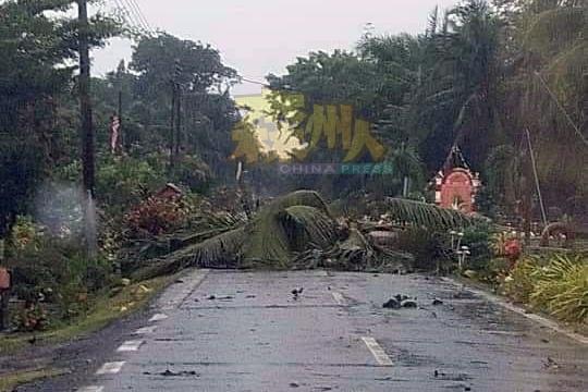 不少大树被狂风吹倒在路上,造成通车路段一度中断。