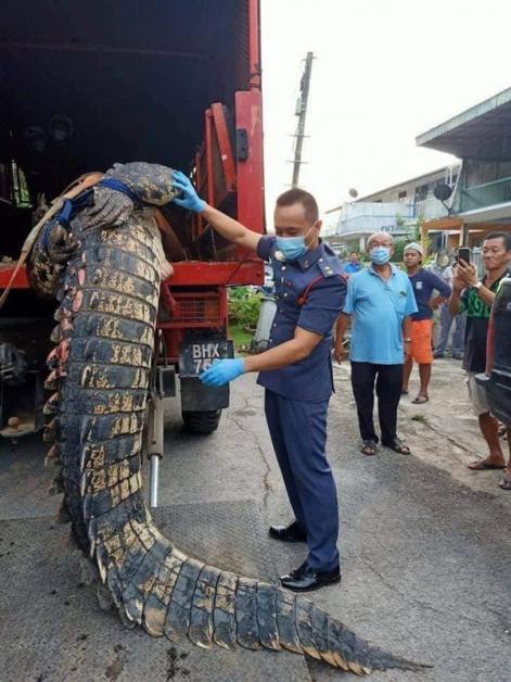 消拯官员展示该只约16尺长、800公斤重的巨鳄。