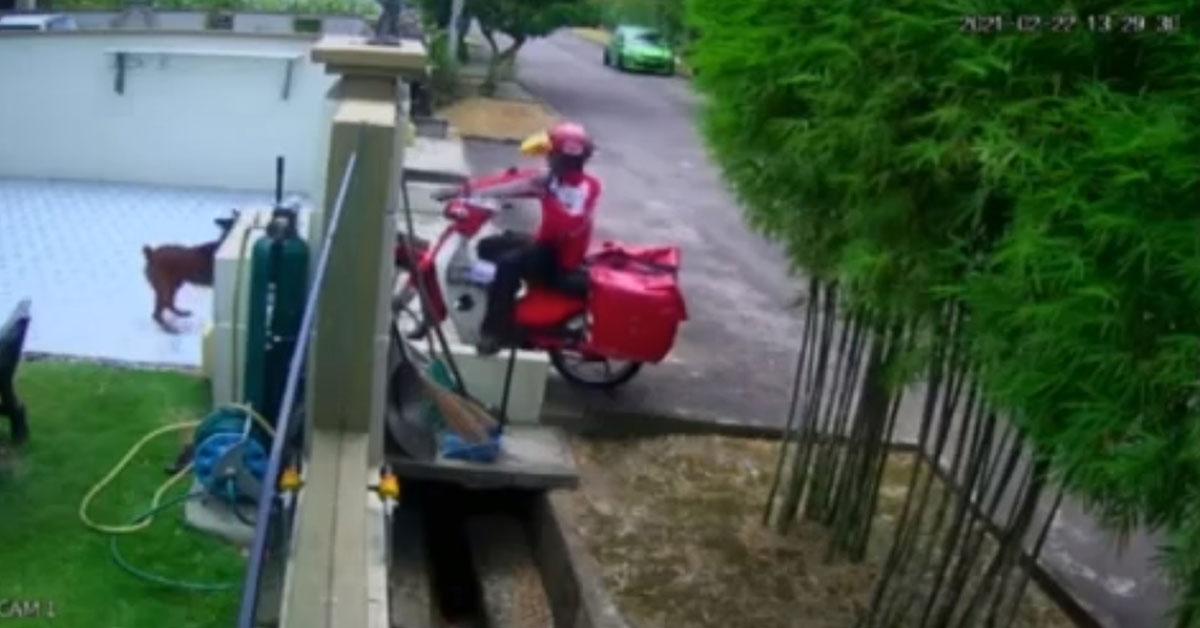 一名邮差用弹弓射伤狗狗。
